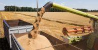 Уборка пшеницы на поле. Архивное фото