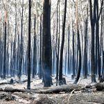 Последствия лесных пожаров на юго-востоке Австралии. Огонь уже уничтожил тысячи гектаров леса, в том числе места обитания коал.