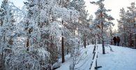 Заснеженный лес. Архивное фото