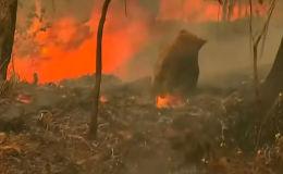 По соцсетям разлетелось видео, где жительница Австралии, рискую жизнью, спасает животное, оказавшееся в огненной западне.