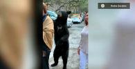 Медведь неожиданно появился рядом с группой туристов, встал на задние лапы за спиной женщины и стал вежливо хлопать ее по плечу, прося еды.