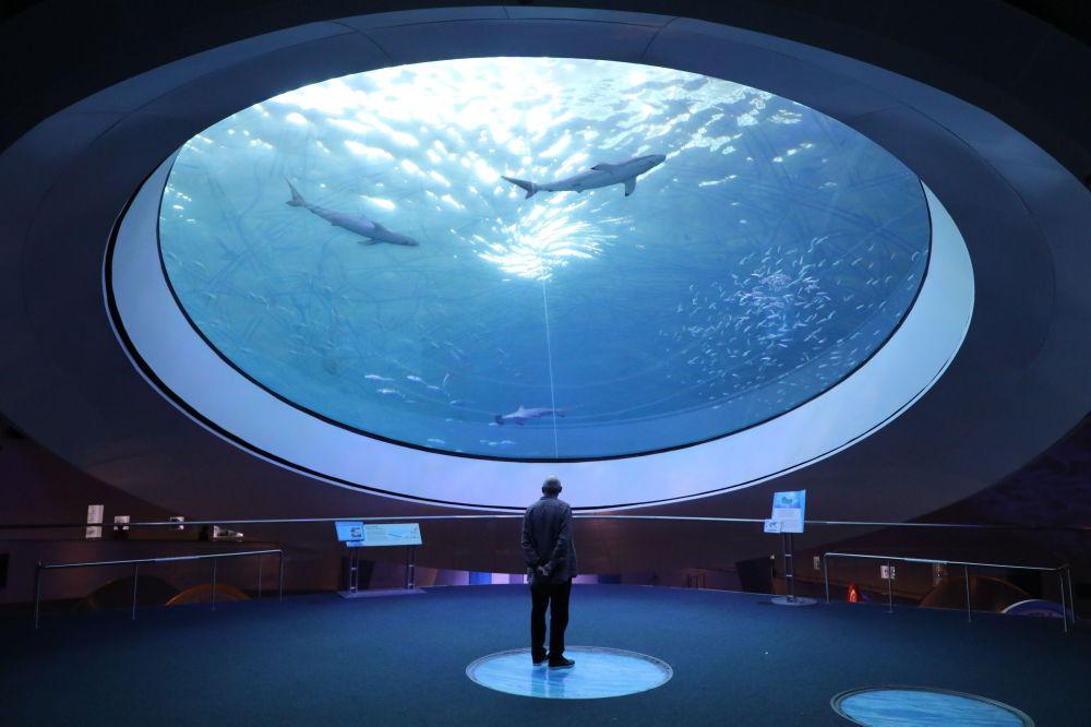 Посетитель океанариума в Майами (США)