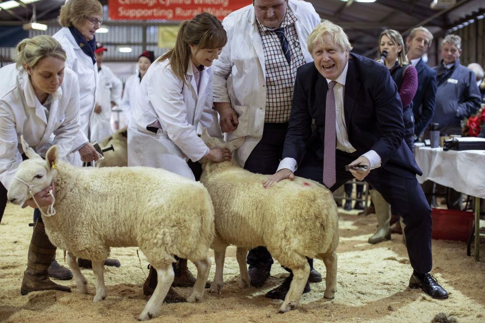 Премьер-министр Великобритании Борис Джонсон на Уэльской сельскохозяйственной выставке в Лланелведде