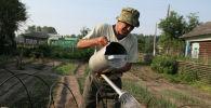 Мужчина поливает грядку у себя в огороде. Архивное фото