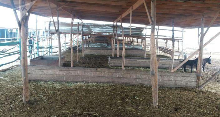 Ослиная ферма в Ошской области