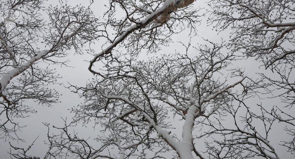 Снег на деревьях. Архивное фото