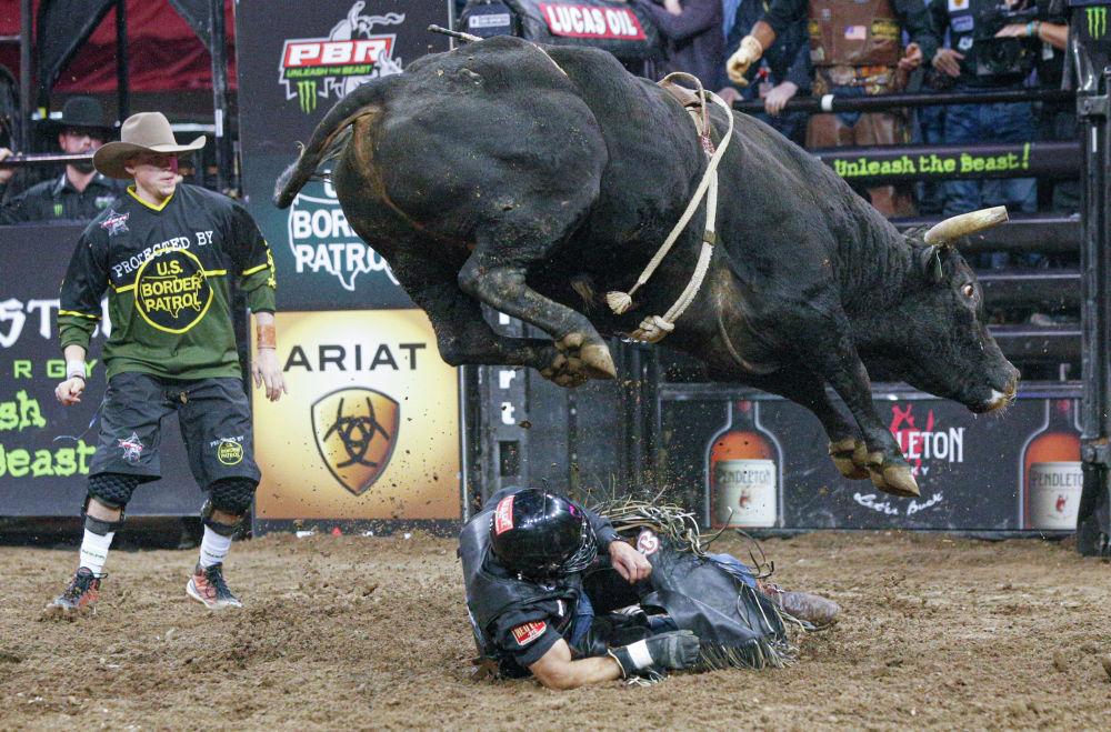 Участник родео на быке Рубенс Барбоса падает на соревнованиях PBR Unleash the Beast Bull Riding в Нью-Йорке. 3 января 2020 года