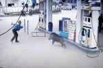 Кабан напал на работников заправки и клиентов.
