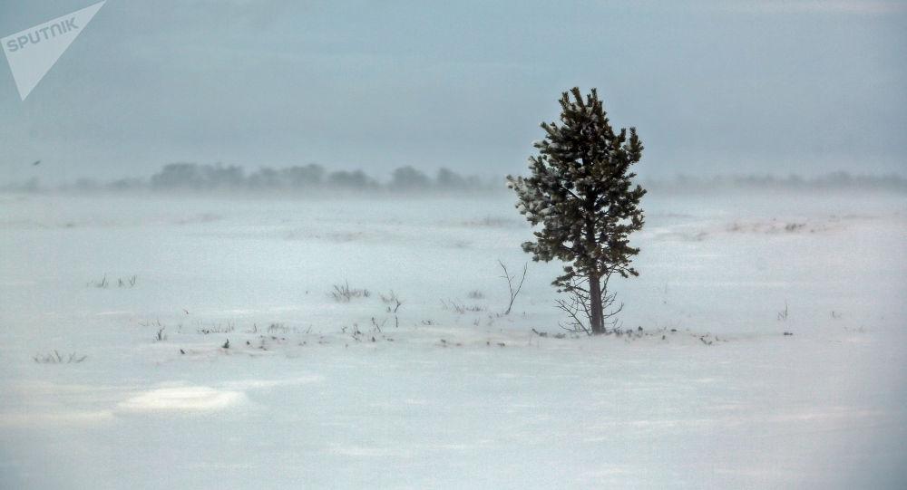 Дерево на поле. Архивное фото