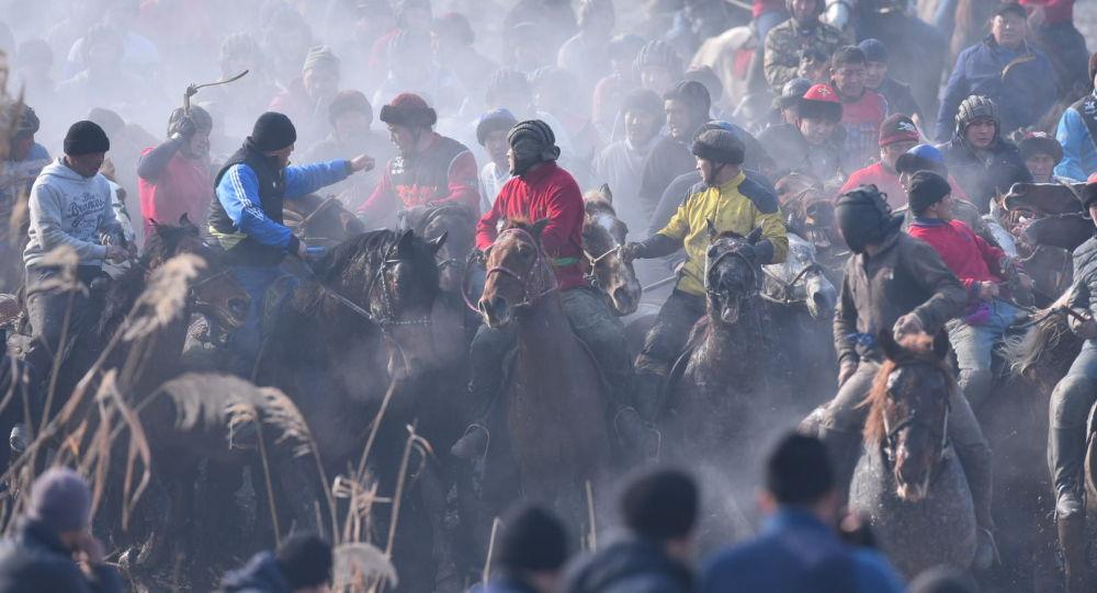 Оштун Кара-Суу районуна караштуу Савай айылында ири аламан улак өтүп жатат.