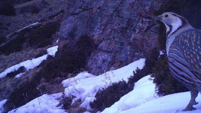 Чүйдөгү Чоң-Кемин мамлекеттик жаратылыш паркынан жаныбарлардын бир нече түрүн жолуктурууга болот