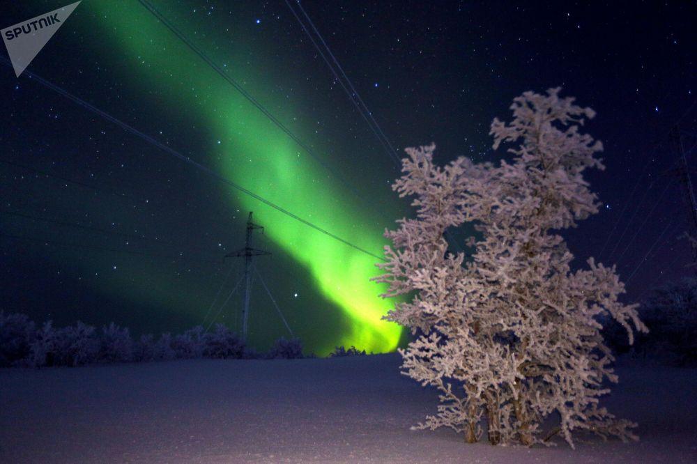Мурманск облусундагы түндүк жаркыроосу