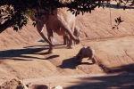 Посетители зоопарка в Сан-Диего (штат Калифорния, США) стали свидетелями небольших разногласий между слонами.