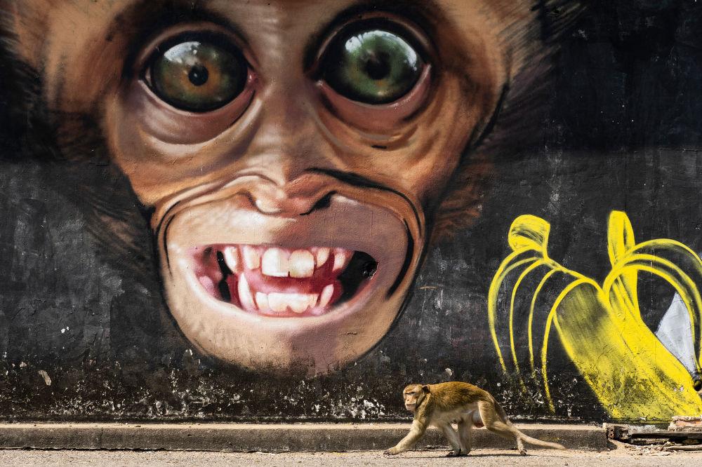 Снимок Обезьянье граффити из серии Город обезьян испанского фотографа Joan de la Malla