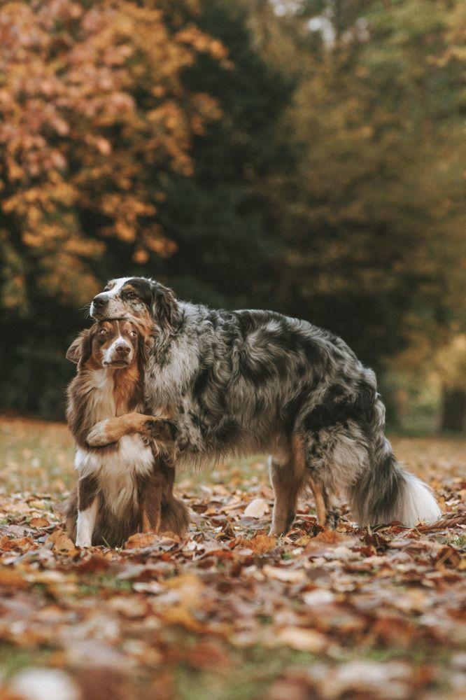 Снимок Собаки фотографа из Германии