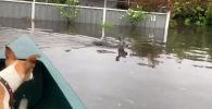 Недавно весь мир обсуждал пожары на зеленом континенте, теперь на Австралию обрушились дожди, которые стали причиной наводнений.