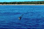 Фотограф из Австралии Квентин Ропер едва не потерял свой дрон, пытаясь снять с близкого расстояния гребнистого крокодила.