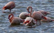 Фламинго. Архив