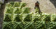Продавец арбузов в Индии. Архивное фото