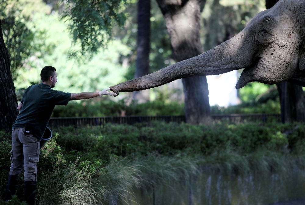 Сотрудник зоопарка кормит слона в Буэнос-Айресе (Аргентина)