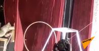 Рысь набросилась на дрессировщика во время циркового представления в городе Цхинвале в Южной Осетии, когда он потянул ее за поводок.