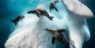 Снимок Frozen Mobile Home французского фотографа Greg Lecouer, ставший победителем конкурса The Underwater Photographer of the Year 2020