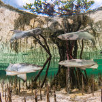 Питомник лимонных акул в мангровых зарослях привел Аниту Кайнрат (Anita Kainrath) победил в категории Вверх и вперед