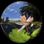 Водная лилия с озера на индонезийском острове Сулавеси оказалась счастливой для фотографа, выступающего под псевдонимом ManBD. Победа в номинации Компактная камера.
