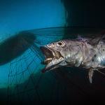 Последний рассвет, последний вздох Паскаля Вассало (Pasquale Vassallo) назвали лучшим снимком в номинации Сохранение морей