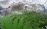 Вода окрашенная в зеленый цвет. Архивное фото