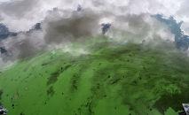 Вода окрашенная в зеленый цвет из-за цветения водорослей на плотине Сент-Люси во Флориде, США. 5 июля 2016 года