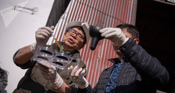 Япониялык адис Киношита Хидэтоси ооруну алдын алуу үчүн уйду саап бүткөндөн кийин эмчегин йод аралашмасы менен сүртүп коюу керектигин кошумчалады.