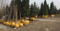 Бишкектеги көчөт саткан жайлар