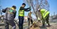 Сотрудники Бишкекзеленхоза во время посадки деревьев. Архивное фото
