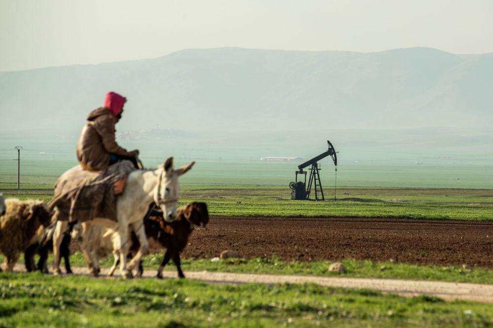 Пастух проезжает мимо нефтяного месторождения в сирийской провинции Эль-Хасака недалеко от турецкой границы