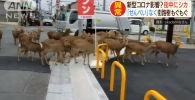 Все больше государств вводят карантин в населенных пунктах. Там, где людей просят на улицы не выходить, начинают появляться дикие животные.