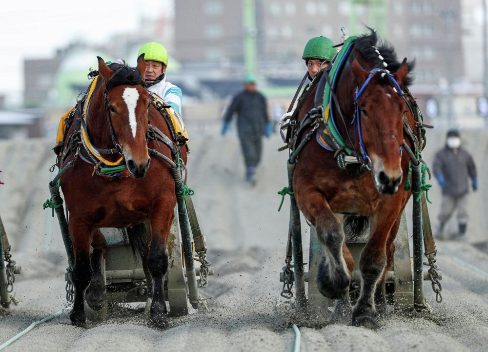 Участники конных скачек Banei в Японии. 24 февраля 2020 года