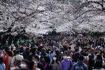 Люди в медицинских масках проходят рядом с цветущими вишнями в парке Уэно в Токио. Архивное фото