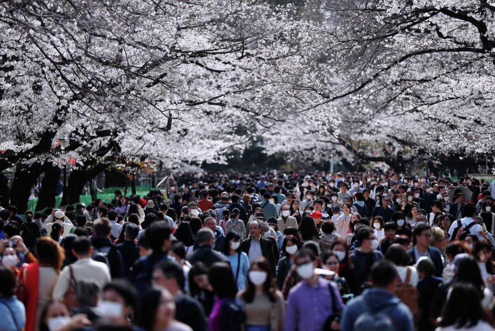 Люди в медицинских масках проходят рядом с цветущими вишнями в парке Уэно в Токио (Япония). 22 марта 2020 года