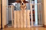 Жительница Португалии, находясь на карантине, от скуки устроила своей собаке челлендж с рулонами туалетной бумаги.