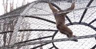 Животные зоопарка ни в чем не нуждаются, их жизни ничего не угрожает. За время работы в режиме ЧП некоторые животные и птицы принесли приплод.