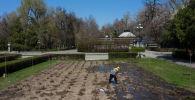 Сотрудник МП Зеленхоз поливает цветы на площади Ала-Тоо в Бишкеке