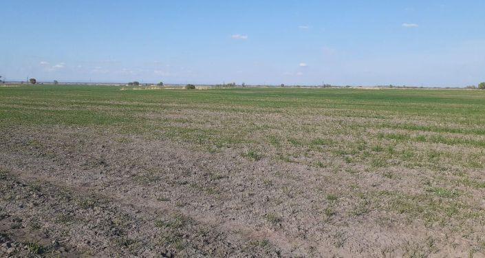 Весенне-полевые работы в Чуйской области