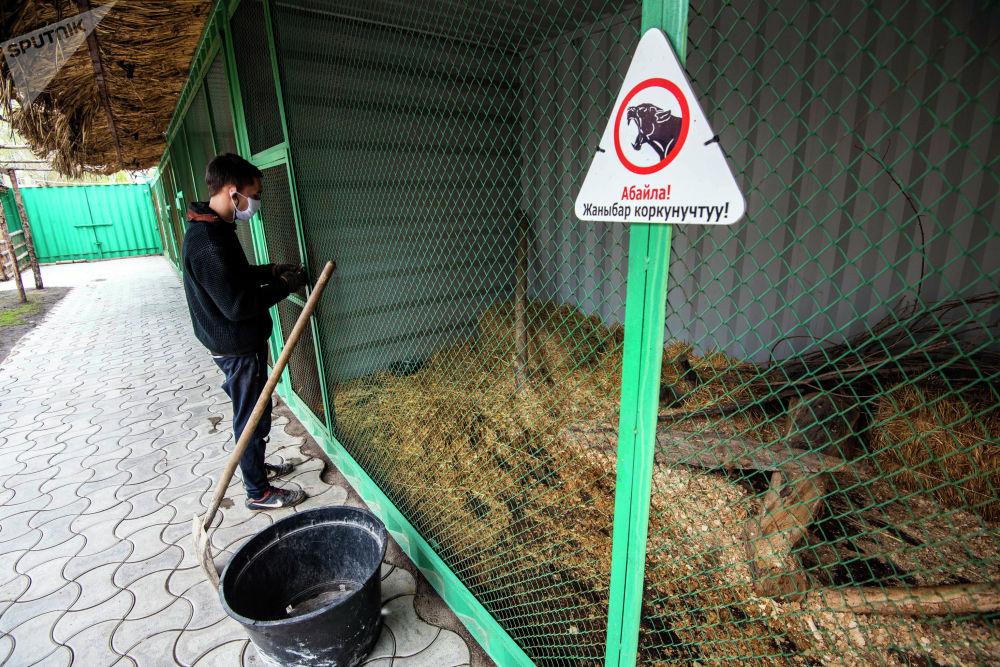 Сотрудник реабилитационного зоопарка проводит уборку вольера