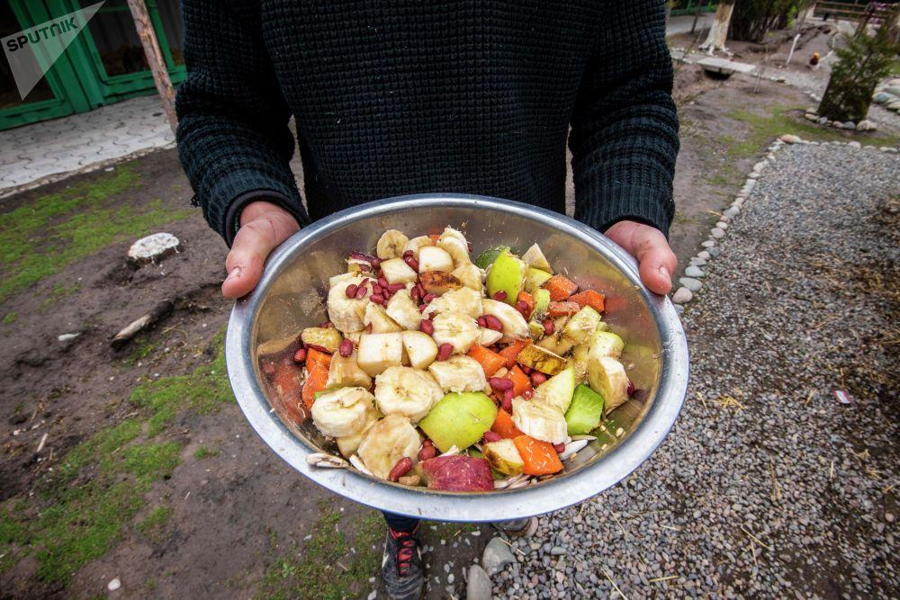 Корм из фруктов и овощей в реабилитационном зоопарке Zoobishkek в парке Асанбай в Бишкеке