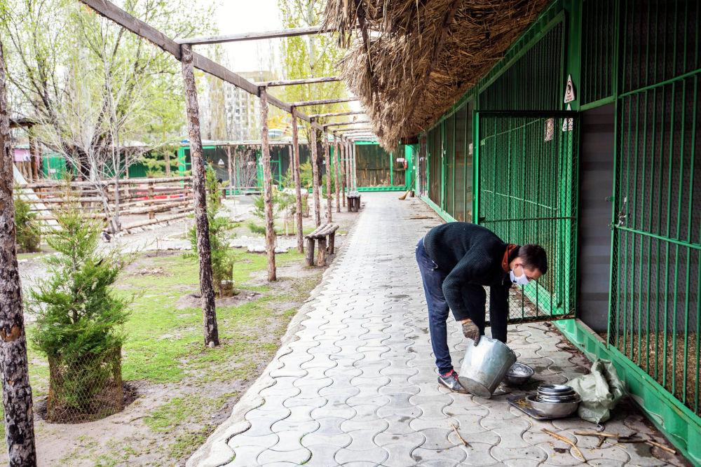 Сотрудник готовит корм для животных в реабилитационном зоопарке Zoobishkek в парке Асанбай в Бишкеке