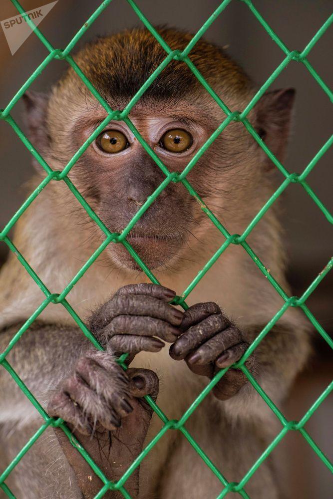 Обезьяна в реабилитационном зоопарке Zoobishkek в парке Асанбай в Бишкеке