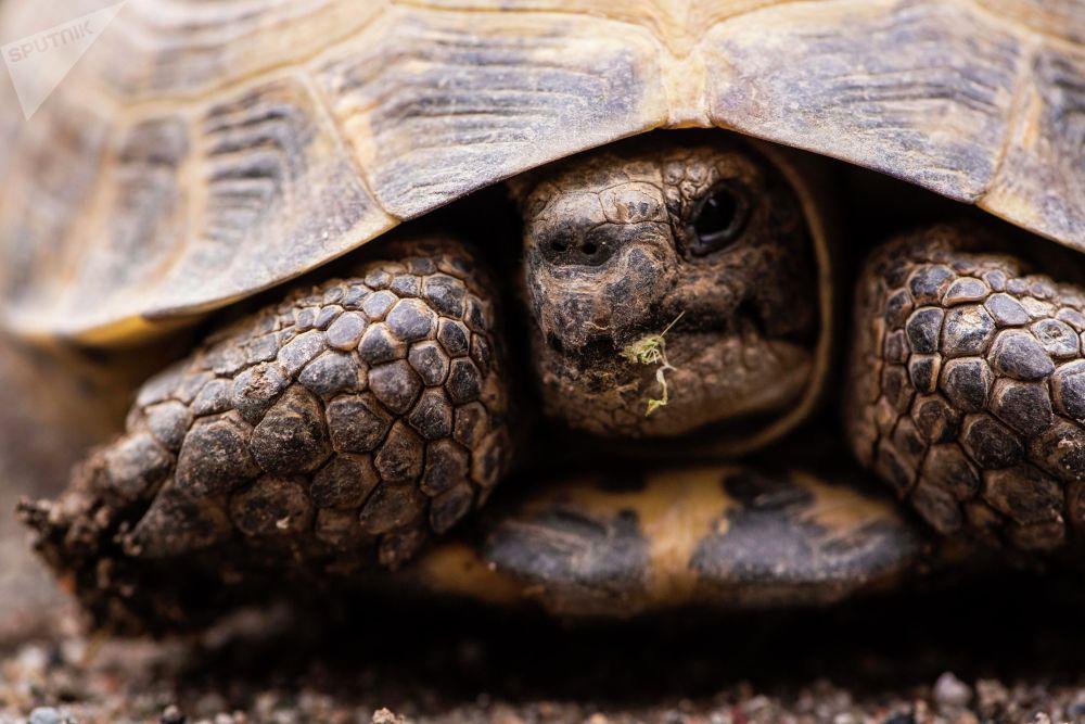 Черепахи всем известные долгожители и видимо на их веку было немало кризисов и эпидемий