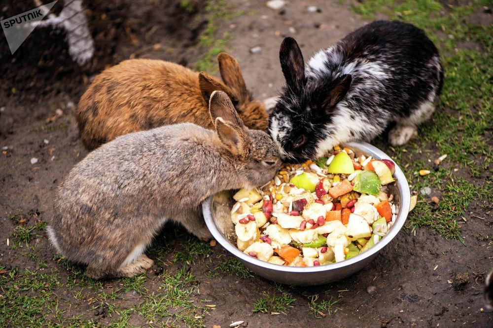 Помимо экзотических животных в зоопарке есть и обыкновенные зайцы
