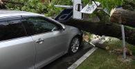 Дерево упавшее на автомобиль. Архивное фото
